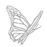 ButterflyStamp